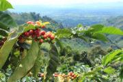 Coffee Axis